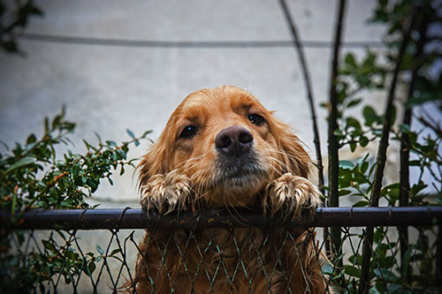 Redes de Proteção para Animais em SP
